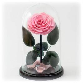 Невянущие розы в Курганинске..